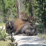 Yellowstone (Part II), The Video